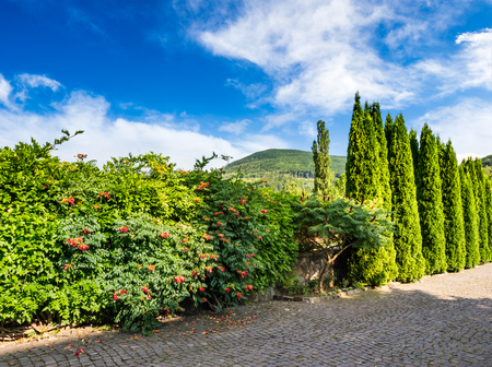 small park with conifer trees and bushes with red flowers and cobbled street in mountains Stock Photo