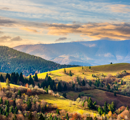 autumn landscape. meadow on the slope of mountain range with coniferous forest in morning light