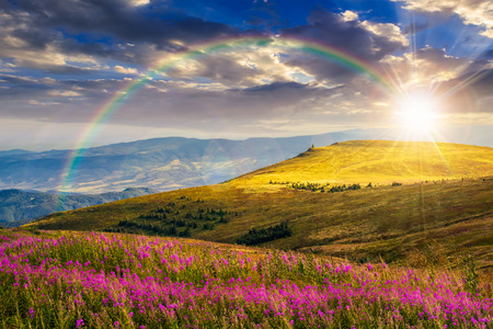 flowers sun: landscape with high wild grass and purple flowers on the hill in  high mountain in sunset light Stock Photo