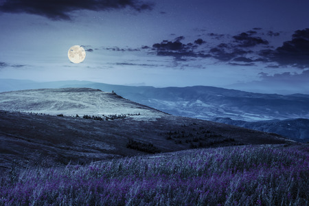 landscape with high wild grass and purple flowers on the hill in  high mountain at night in full moon light Stok Fotoğraf