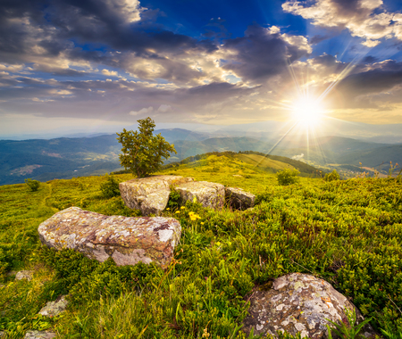 夜の光の山脈の上に丘の牧草地の岩の後ろに小さなツリー