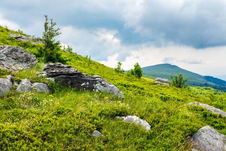 hillside of mountain range with coniferous tree on meadow in morning light