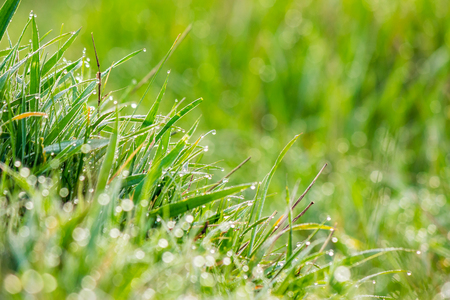 forest glade  close up with shiny blur of wet grass in the warm sun light Stock Photo