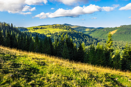 early autumn landscape. field in front of coniferous forest on a steep hillside in romanian mountains in morning light
