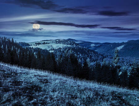 early autumn landscape. field in front of coniferous forest on a steep hillside in romanian mountains at night in full moon light Stock Photo