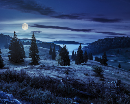 hillside with coniferous forest among the fog on a meadow in mountains of Romania at night in full moon light Stockfoto