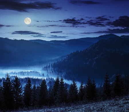 cold fog at night in full moon light over conifer forest in  mountains