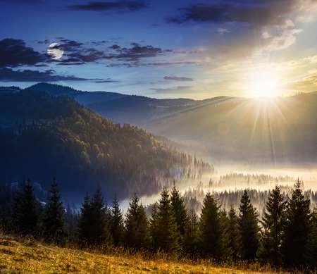 fir trees in fog on hillside of mountain range with coniferous forest and meadow. composite image day and night with full moon