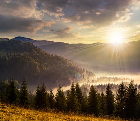 cold fog with hot sunset in conifer forest in  mountains Stockfoto