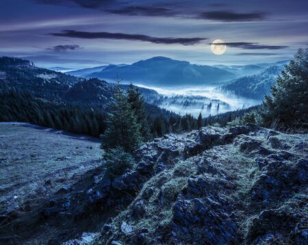 fog foggy: view from a rocky cliff to full of fog valley with conifer forest in high mountains of Apuseni Natural Park in Romania at night in full moon light