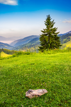 lonely fir tree, on the meadow with green grass and stone, on the edge of mountain slope in front of the mountain range in fog at sunrise