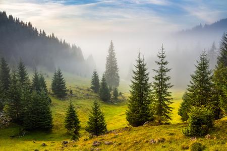 Tannen auf der Wiese zwischen den Hügeln mit Nadelwald im Nebel unter dem blauen Himmel vor Sonnenaufgang