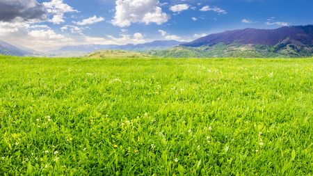 rural landscape. fresh grass on the flat meadow near the high mountains
