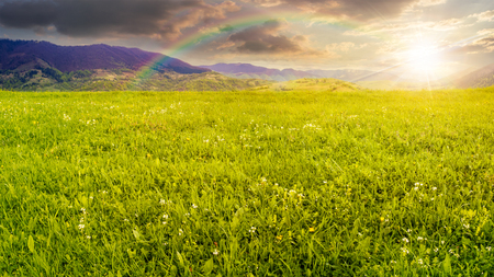 rural landscape. fresh grass on the flat meadow near the high mountains in evening light under the rainbow