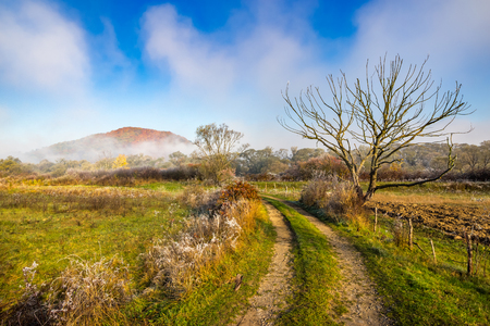 rural landscape with road to mountain through forest and agricultural meadow with fence and few  trees in late autumn foggy and frosty morning Stock Photo
