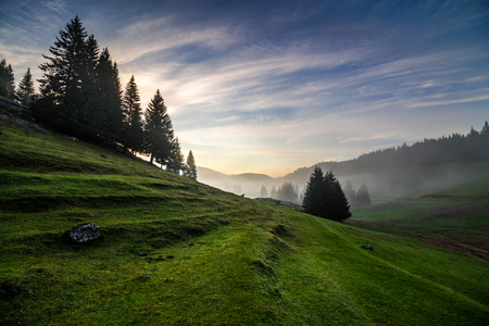 hillsides: fir trees on meadow between hillsides with conifer forest in fog under the blue sky before sunrise
