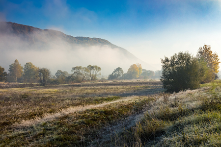 morning fog among trees on meadow in mountains  under clear sky in autumn