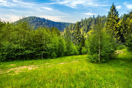composite landscape. path through the field with green grass in mountains near the forest in morning light Stock Photo