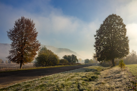 road on through the meadow  forest in foggy mountains in morning light
