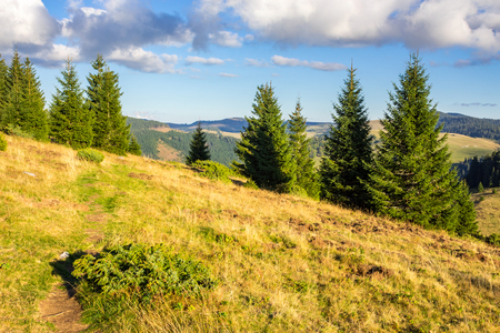 two fir trees on hillside of mountain range with coniferous forest and meadow in morning light Stock Photo