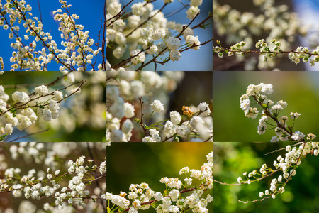spring collage of small white flowers on a colourful blurry backgrounds