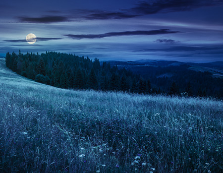 summer trees: large meadow with mountain herbs and a conifer forest in front of mountainous massif away in the background at night in full moon light