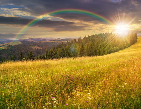 large meadow with mountain herbs and a conifer forest in front of mountainous massif away in the background under the rainbow in evening light Stock Photo - 50571402
