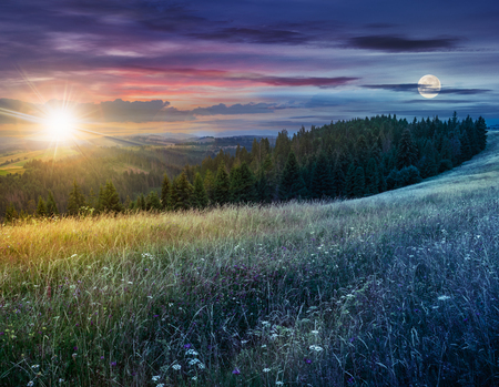 day and night composite image of large meadow with mountain herbs and a conifer forest in front of mountainous massif away in the background