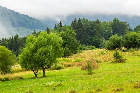 haystack near two trees on a green meadow at the mountain hill in fog Stock Photo