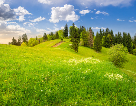 few trees on agricultural meadow with flowers on  hillside near forest in morning light Stock Photo