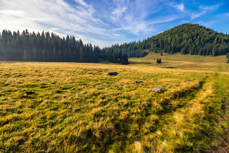hillside with coniferous forest among the fog on a meadow in mountains of Romania in morning light Stock Photo