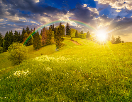 few trees under the rainbow on agricultural meadow with flowers on  hillside near forest in morning light in evening light