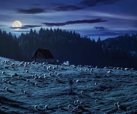 ルーマニアの満月の光で夜の山のモミの森に近い丘の中腹に草原の羊の群れ