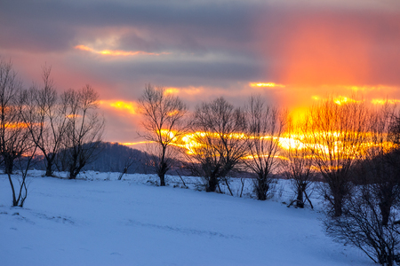 winter landscape. naked trees in red sunset light on the meadow in mountains