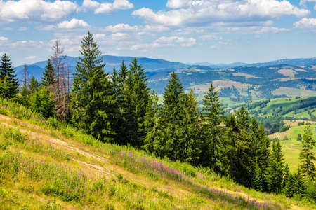a slope: coniferous forest on a steep mountain slope