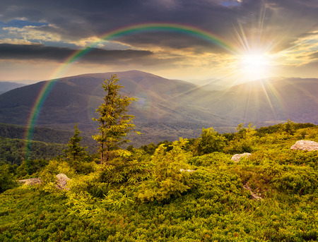 eenzame naaldboom boom en stenen op de rand van de heuvel met pad in het gras op de top van een hoge bergketen in de avond licht onder de regenboog Stockfoto