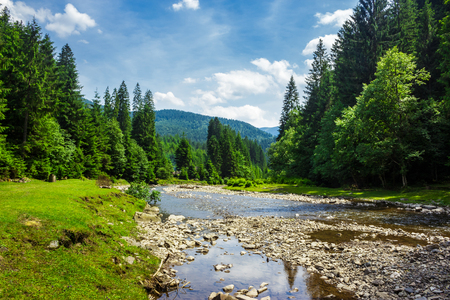 summer landscape with river flowing between green mountains through the forest