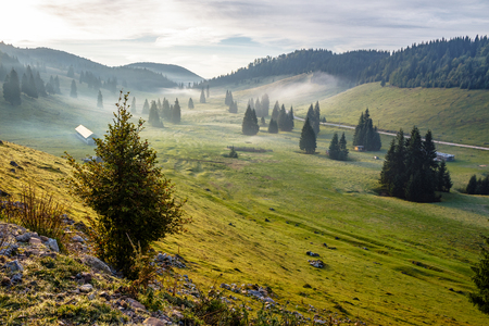 cold morning fog with hot sunrise in conifer forest in  mountains of Romania Stock Photo