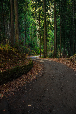 old cracked asphalt road goes through the green shaded forest in mountains