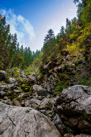 rocky hillside of mountain range with coniferous forest in Apuseni National Park in Romania