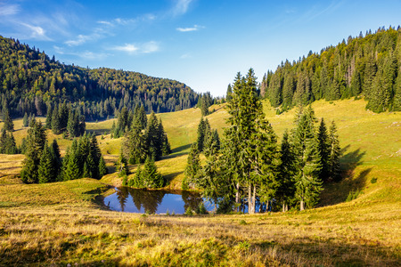 mountain summer landscape. pine trees on hillside meadowwith wild flowers  near small lake  in mountains in morning light