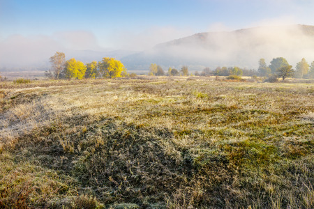 morning fog among trees on meadow at the foot of the mountain Stock Photo