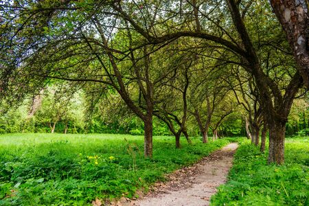 trail  in the shade of fruit trees of green garden near the meadow Stock Photo