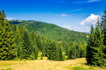가파른 산 경사면에 구과 맺는 숲