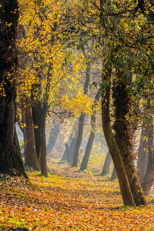 trail through  the deep autumn forest with foliage in morning light Stock Photo