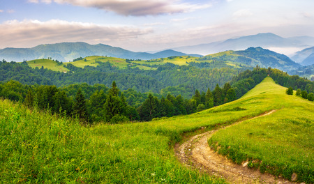 composite landscape with empty road to coniferous forest through the grassy hillside meadow on high mountain range in morning light