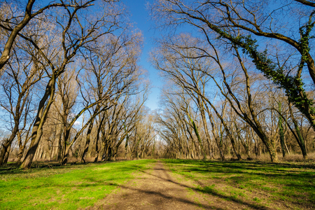 trail through lawn in deep ancient forest with naked trees in spring Stock Photo