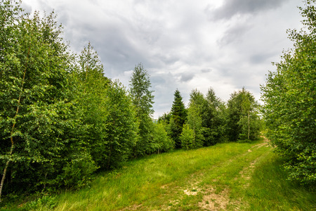 trail  in the shade of trees of green forest on hillside