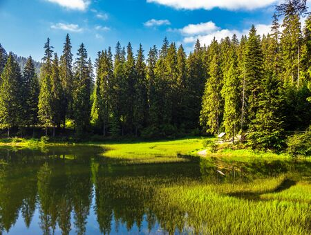 landscape near the lake among conifer forest  in the early summer morning Stock Photo