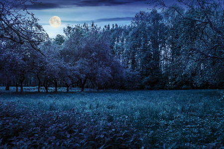 lawn in the shade of fruit trees of green fruit garden in spring at night in full moon light